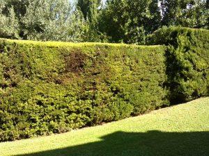 IMG_4836-jardin